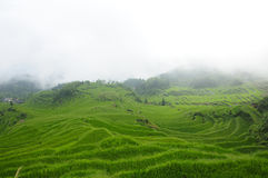 Rice Terraces of Yunhe County China Royalty Free Stock Photo