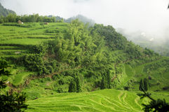 Rice Terraces of Yunhe County China Stock Photography