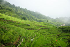 Rice Terraces of Yunhe County China Royalty Free Stock Image