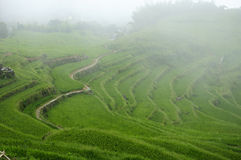 Rice Terraces of Yunhe County China Royalty Free Stock Photography