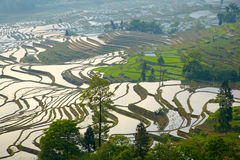 Rice terraces. Yunnan, China. Royalty Free Stock Image