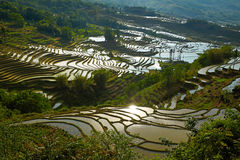 Rice terraces. Yunnan, China. Royalty Free Stock Photo