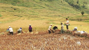 Rice Terraces Yunnan stock video footage