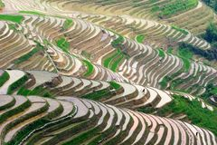 Rice terrases. Beautiful rice terraces and some workers at sunset stock photos