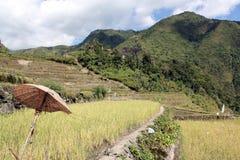 Rice terrases Stock Photo