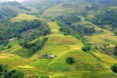 Rice terrasserar Sapa Arkivfoto