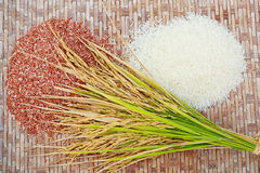 Rice on the threshing basket. Royalty Free Stock Photography