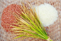 Rice on the threshing basket. Ear of rice and rice's grains on the threshing basket Stock Images