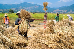 Rice threshing in Thailand royalty free stock photography