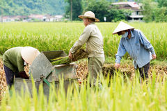 Rice threshing in Vietnam Royalty Free Stock Photo