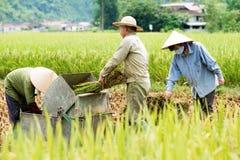 Rice threshing in Vietnam Royalty Free Stock Photo