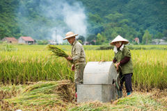 Rice threshing in Vietnam Royalty Free Stock Image