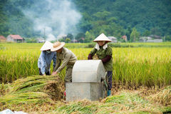 Rice threshing in Vietnam Stock Photos