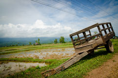 Rice trailer. With rice field background Royalty Free Stock Images