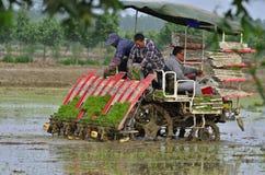 Rice transplanter is transplanting Royalty Free Stock Photo
