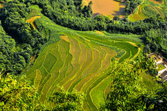Rice terraced field Royalty Free Stock Photo