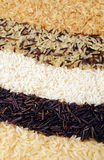Rice types Royalty Free Stock Photo