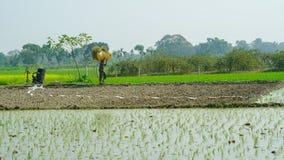 Rice uprawia ziemię na Indiańskim rolnictwie fotografia stock
