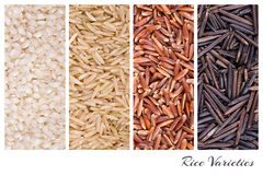Rice varieties collage. A collage of rice varieties of risotto, brown basmati, red camargue and wild thai rice Stock Photography
