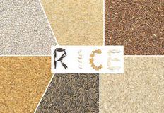 Rice variety Stock Image