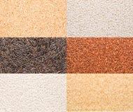 Rice variety Stock Photography