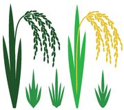 Rice. Vector illustration (EPS 10 Royalty Free Stock Photo