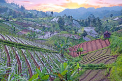 Rice and vegetable fields in the countryside from Java in Indone Stock Photo