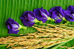 Rice and violet flower on green. Leaf background Royalty Free Stock Photography