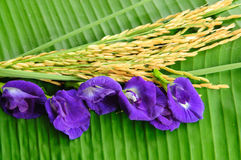 Rice and violet flower on green leaf. Background Stock Photo