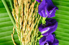 Rice and violet flower on green leaf. Background Royalty Free Stock Photos