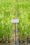Rice w polu Zdjęcie Stock