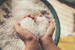 Rice w ręce Zdjęcia Royalty Free