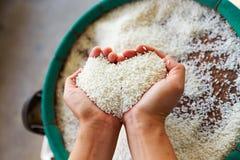 Rice w ręce Zdjęcia Stock