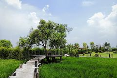 Rice walkway royalty free stock images
