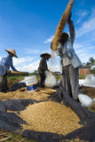 Rice Winnowing in Bali, Indonesia Royalty Free Stock Photos