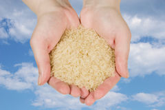Rice in woman's hands Stock Photography