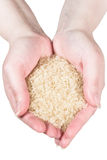 Rice in woman's hands. (isolated on white Royalty Free Stock Photography