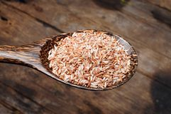 Rice in wooden spoon Royalty Free Stock Photo