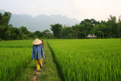 Rice worker Royalty Free Stock Image