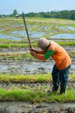 Rice worker, Indonesia Royalty Free Stock Images