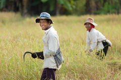 Rice workers Royalty Free Stock Photos