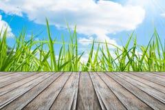 Rice zielonej trawy niebieskiego nieba śródpolny krajobraz zdjęcie stock