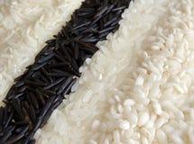 Ricebakgrund royaltyfri foto