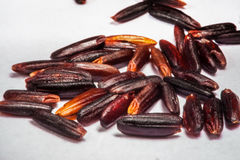 Riceberry. Healthy Brown Rice berry in Thailand Stock Photography