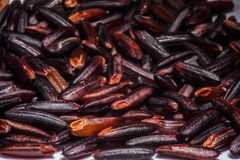 Riceberry. Healthy Brown Rice berry in Thailand Stock Images