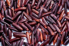 Riceberry. Healthy Brown Rice berry in Thailand Stock Photos