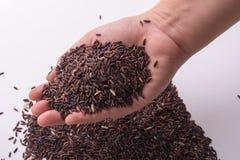 Riceberry-Reis in den Händen, die Draufsicht halten Stockfoto