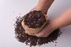 riceberry Reis in den haltenen Händen, Draufsicht Lizenzfreies Stockbild