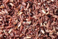 Riceberry spis Royaltyfria Foton
