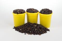 Riceberry tailandês Imagem de Stock